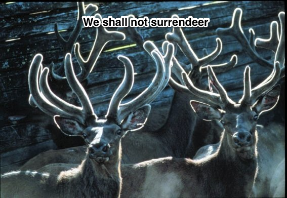 We shall not surrendier